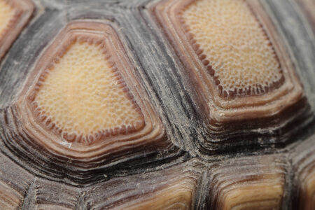Close up photo of a brown tortoiseshell