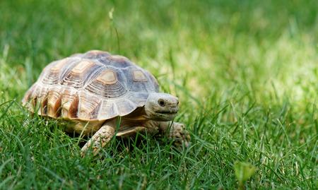 Little cute turtle in the green garss