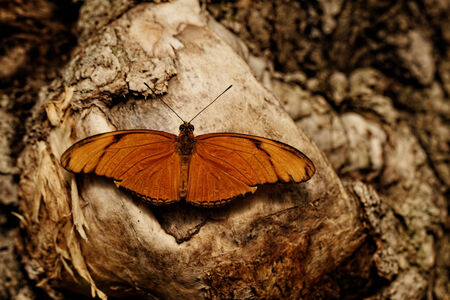 Photo of a beautiful colorful butterfly at work photo