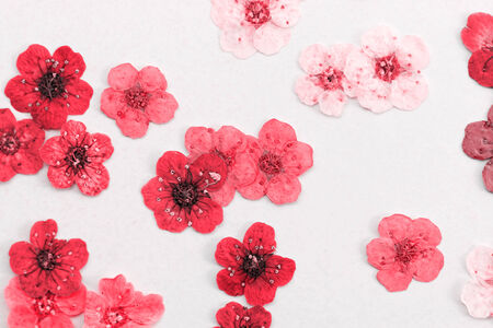 Decorative montage compilation of colorful dried spring flowers (red) photo