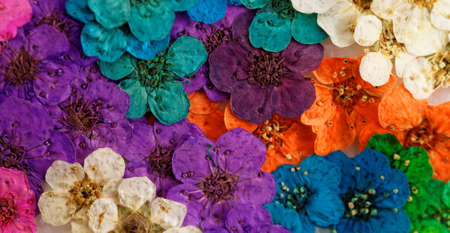 Decorative montage compilation of colorful dried spring flowers (purple, green, yellow, white) photo