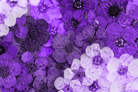 Decorative montage compilation of colorful dried spring flowers (purple) photo
