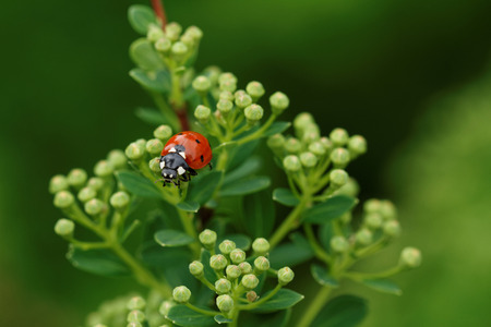 ladybird: Close up photo of beautiful green grass with a ladybird Stock Photo