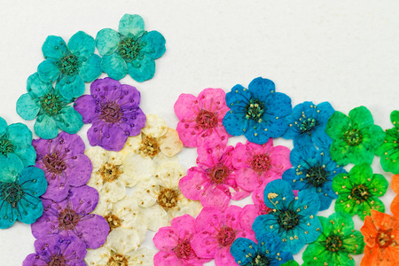 Decorative montage compilation of colorful dried spring flowers (purple, pink, blue, green) Stock Photo