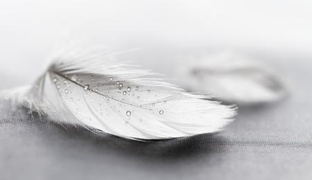 Piuma bianca con gocce d'acqua su sfondo grigio