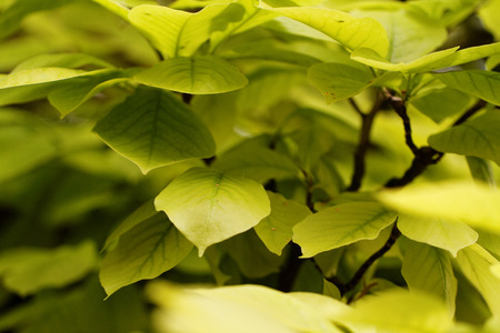 close up view: Close up view of fresh green leaf