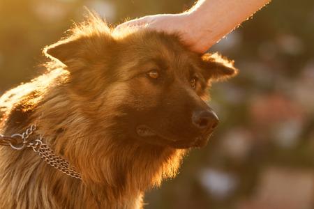 Photo of a friendly German shepherd dog photo