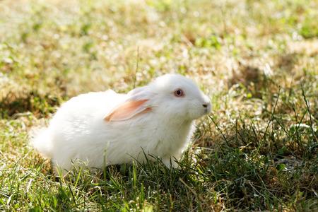 Lapin blanc dans l'herbe verte dans le jardin