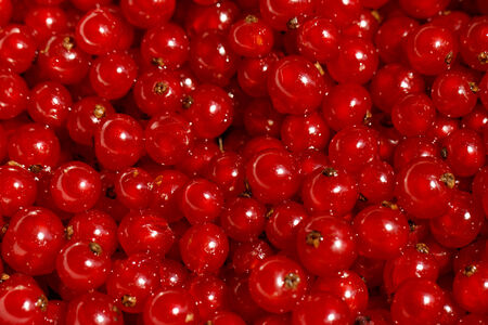 Background of ripe juicy red currant berries photo
