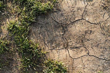 parched: Close up photo of a parched land
