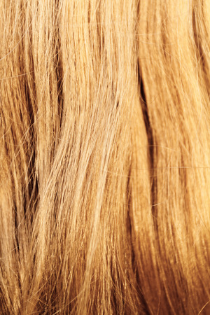 blond streaks: Blonde hair. Blond hair texture - closeup photo