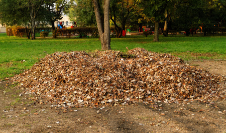 pile of leaves: Pile fallen autumn leaves in the park