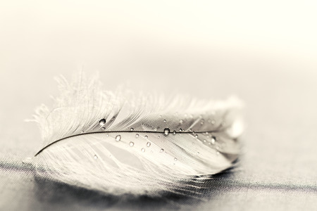灰色背景: 灰色の背景上に水で白い羽ドロップします。