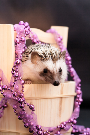 spiked hair: A cute little hedgehog with Christmas decorations