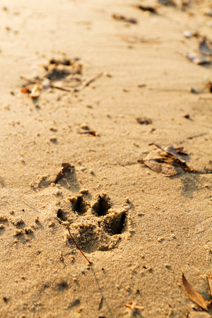 animal foot: Photo of an animal foot print on the sand
