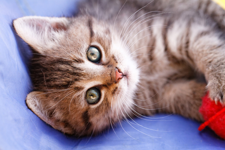 skein: Photo of a cute cat who playing a red skein Stock Photo