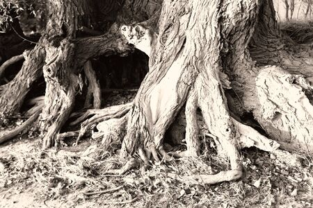 branched: Photo of a trees branched root in the forest