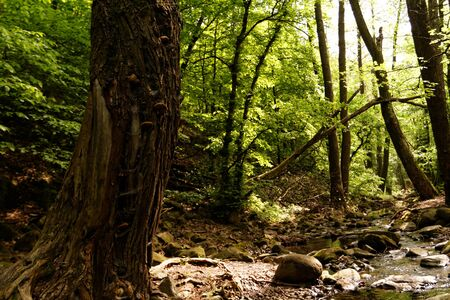jungle scene: Photo of the beautiful brooks in the forest