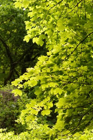 Photo of the green leaves on the tree