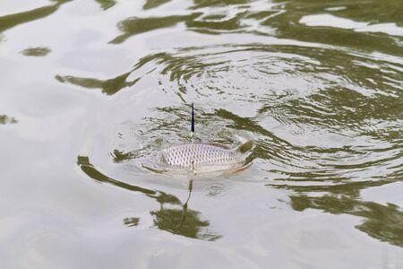 Fishing on a lake. Fish catch! Zdjęcie Seryjne