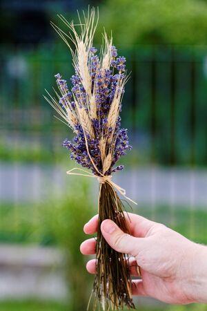 Male hand with levender and wheat Zdjęcie Seryjne