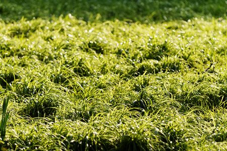 Close up photo of the green grass in the park