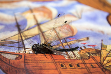 Dragonfly sits on the cover of a photo album with a picture of a sailboat