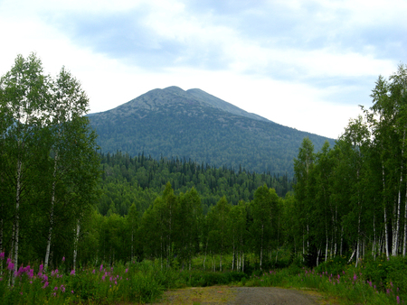 Road through the forest to a lonely mountain in the background