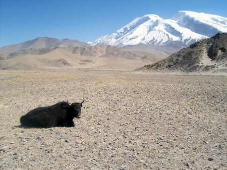 yak and mountains Stock Photo