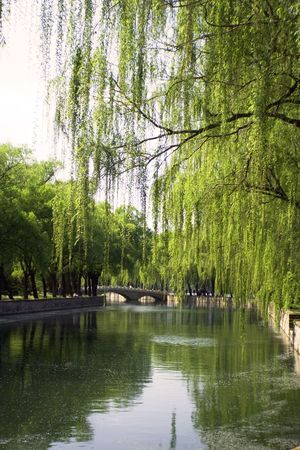 a peaceful park with willows, a bridge and sunshed passages in Beijing photo