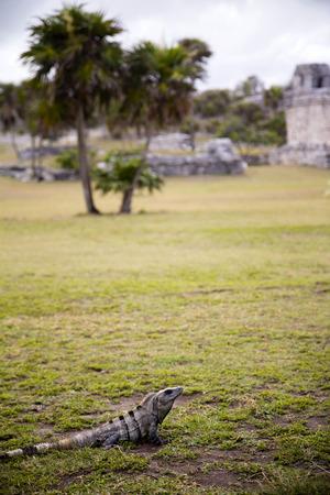 A crocodile lying on the floor