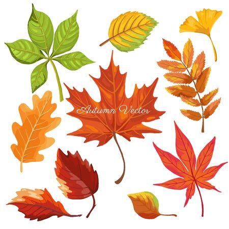 autumn color leaves isolate on white background. vector illustration Stock Illustratie