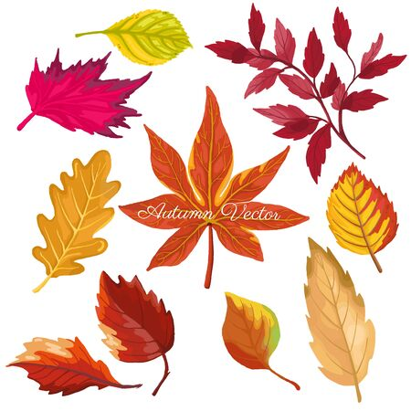 autumn color leaves isolate on white background. vector illustration Illustration