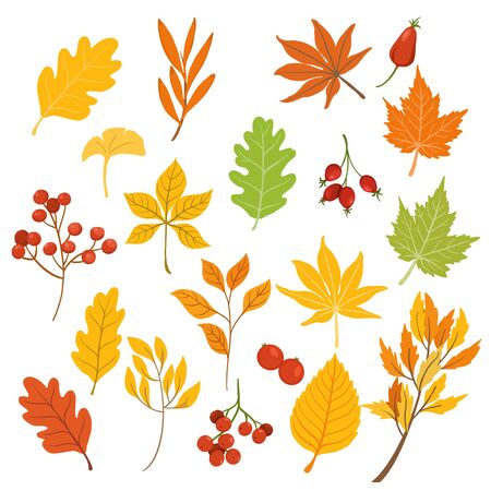 Autumn leaves isolated on withe background flat and fall seasons colors design. vector illustration
