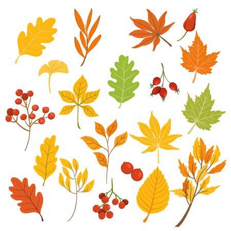 Foglie autunnali isolate su sfondo bianco e design a colori delle stagioni autunnali. illustrazione vettoriale Vettoriali