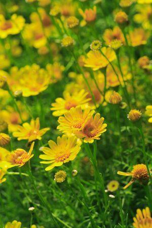 Yellow Flower in Field photo