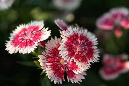 blomming: Red Flower Blomming in Garden Stock Photo
