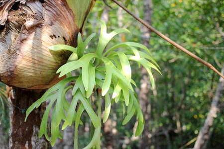 mangrove: mangrove forest leave