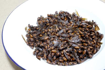 Resultado de imagen de hormigas comida