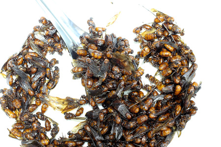 subterranean: subterranean ants, local cuisine of Thai, Northern style food, Lanna style food In The north of Thailand. Stock Photo