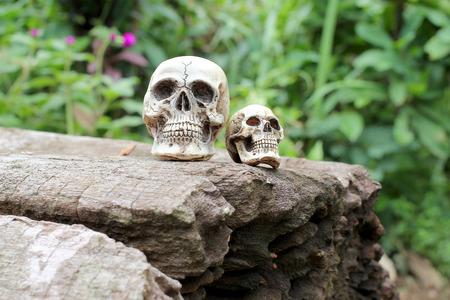 Still life of Human Skull in nature Stock Photo