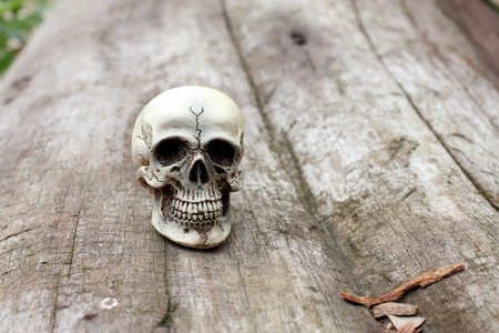 Human skull on old wood background in nature , still life