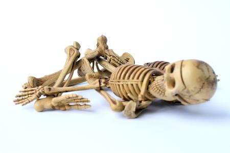 human skeleton isolated on white background Stock Photo