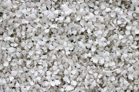 petites fleurs: blanc gris petites fleurs fond. Banque d'images