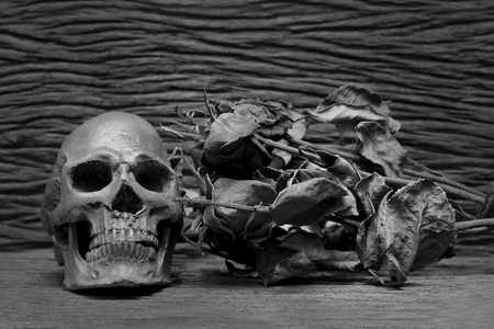 Old human skulls on pile of dried rose flower in dim light dark night on beautiful wooden table  Still life image, and adjustment black and white for background ,