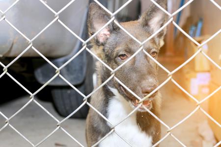Thai Hund Im Gefängnis, Traurig Aussehenden Hund Hinter Dem Zaun ...