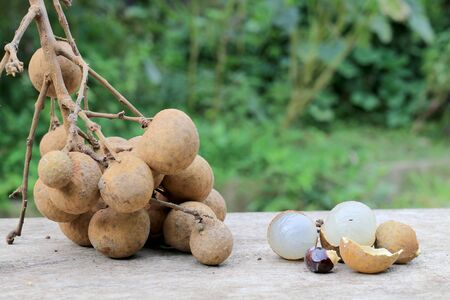 round: Longan Fresh. A bunch of Longan and Peel on a wooden background with green natural background in the garden from northen Thailand.  sweet and fragrant,The brown fruit looks like a sphere.