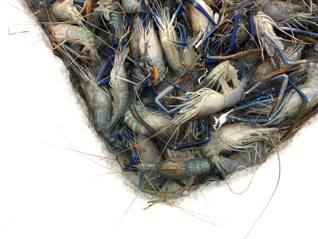 Fresh Shrimp or Prawn lay ice in local market or department store. top view