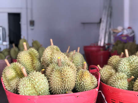 Durian fruit is placed in a red basket for sale to the buyer in fruit market,Thailand. Durian that is known as the king of fruits of Thailand. Standard-Bild