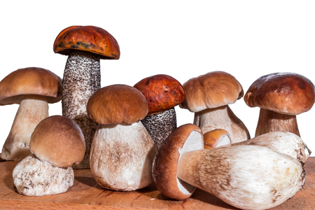 seven mushrooms boletus and two red-capped scaber stalk stand on a wooden board on a white background Stock Photo